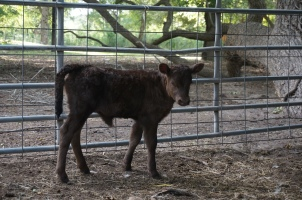 Pixie, 1 week old